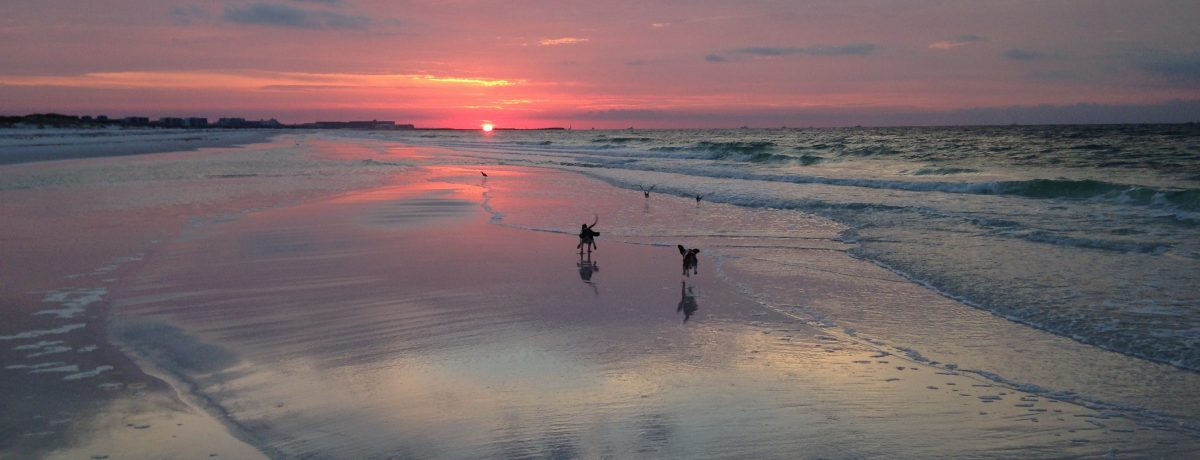 Acupuncture and Holistic Veterinary Services - image of two happy dogs on the beach