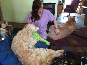 Acupuncture and Holistic Veterinary Services - image of Nikki with a dog patient and a furry visitor